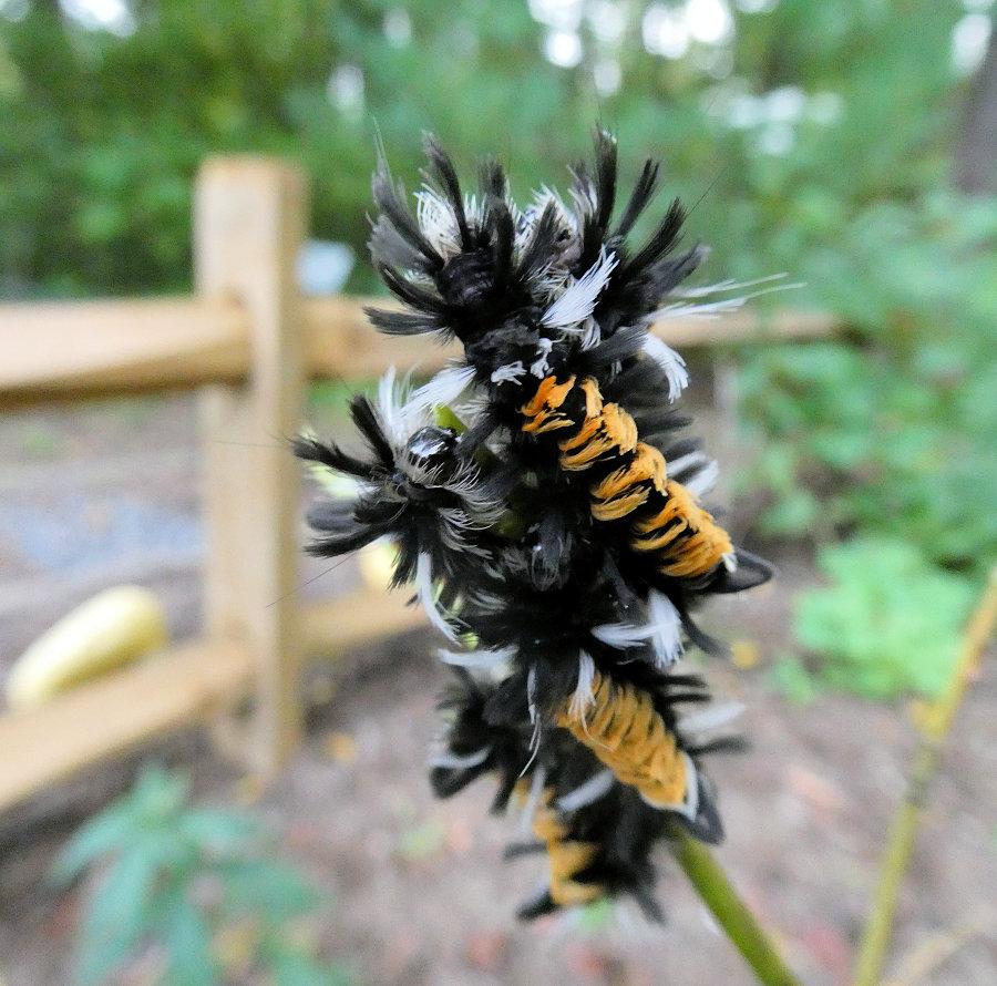 TRWA Milkweed Bandit & Look What is Blooming This Fall at the TRWA!