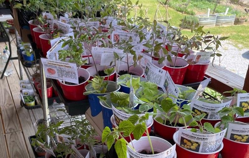 PLANTS 50% OFF - 2021 Tuckaleechee Garden Club Plant Sale - LAST DAY