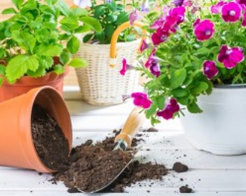 Garden Club Plant Sale Saturday 2020.04.25 Supporting the TRWA